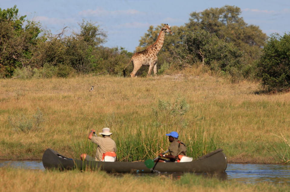botswana-gallery-canoe-trail-viewing-giraffe