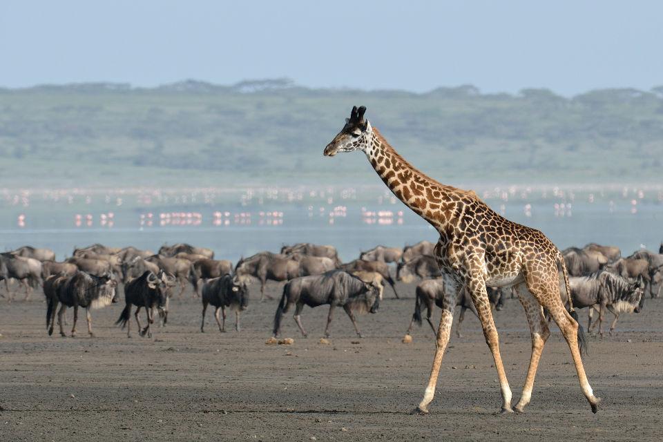 Tanzanie - mars 2012