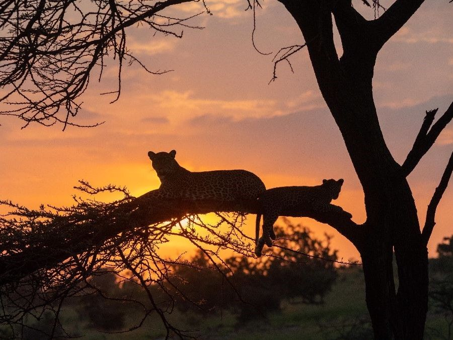 Wildlife Spot of the Week in Kenya