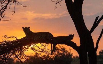 Wildlife Spot of the Week in Kenya