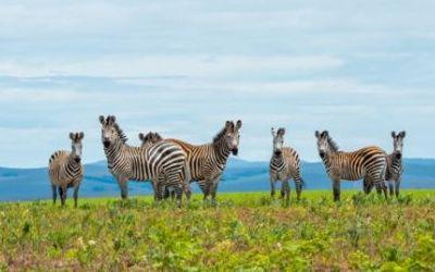 Enjoy the ultimate Green Season safari in Malawi