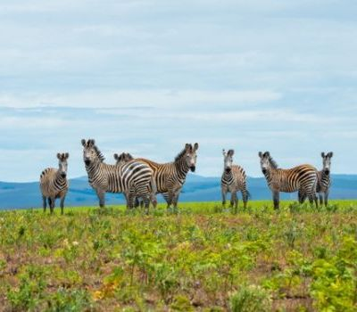 Enjoy the ultimate Green Season safari in Malawi