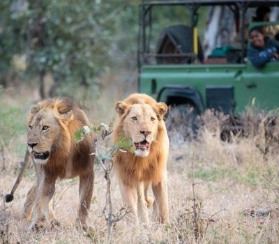 8 Things That Make South Luangwa So Special