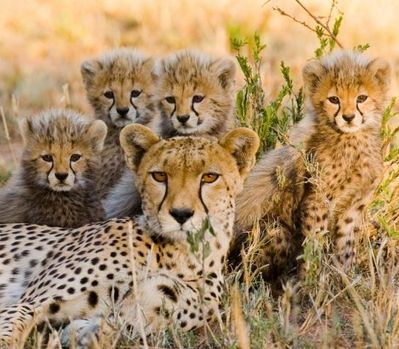 Mara Naboisho Conservancy – Emergency Appeal