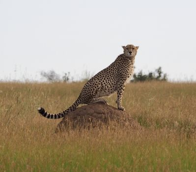 Kenya Safari & Beach Holiday Testimonial & Photos