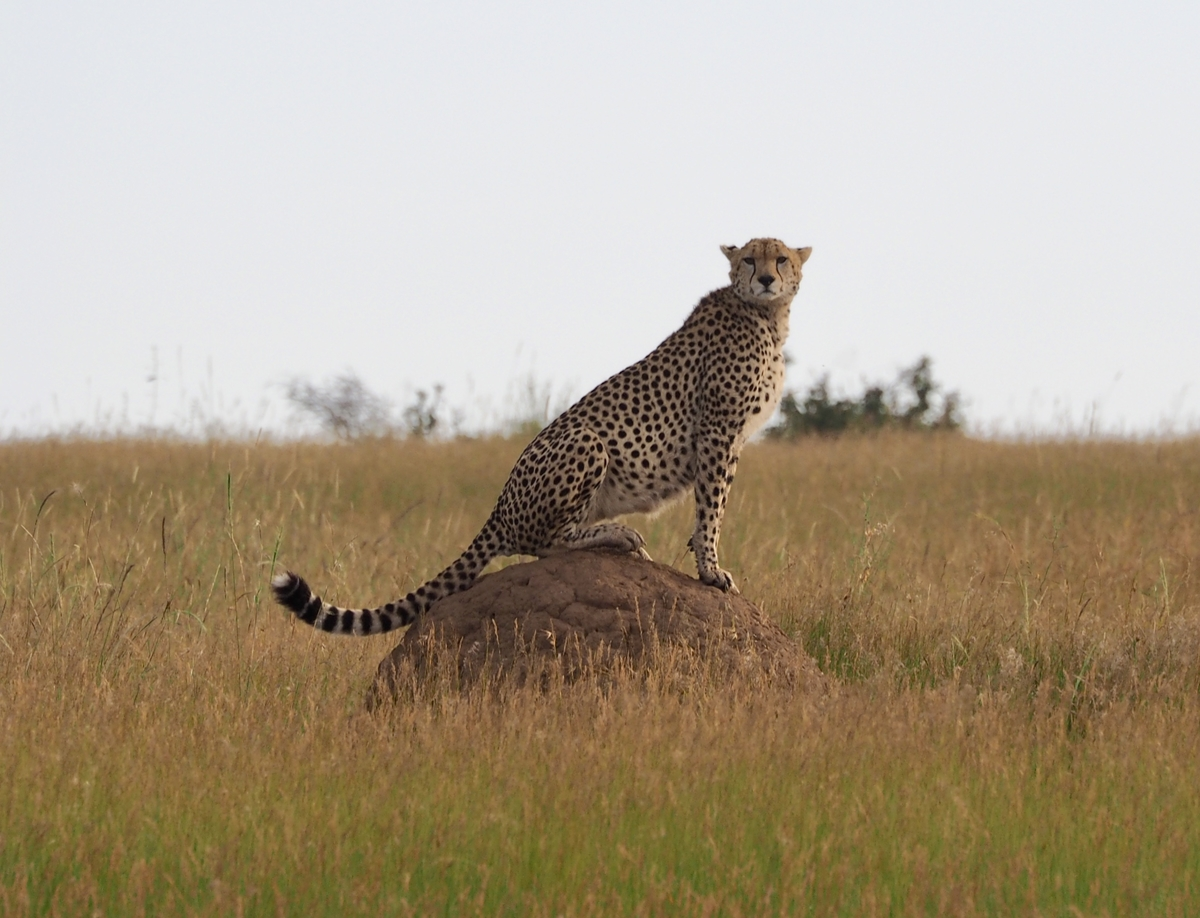 kenya-chappell-feb-2020-18