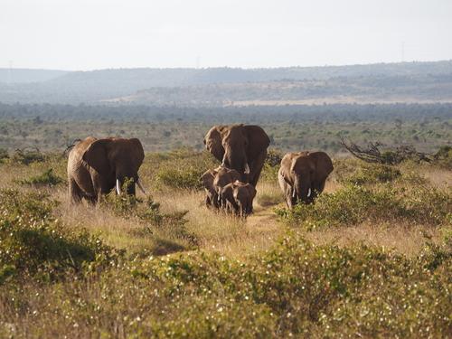 kenya-chappell-feb-2020-34