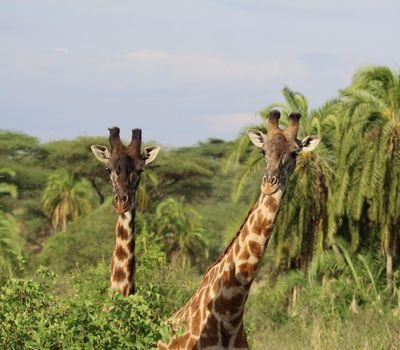Tanzania is Waiting