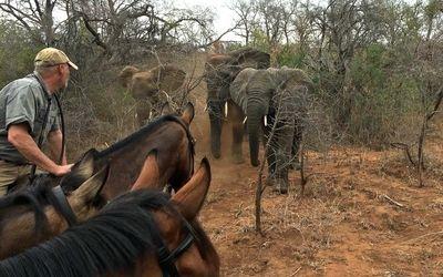 Virtual Horse Safari in South Africa