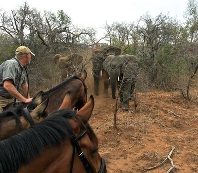 Virtual Horse Safari in South Africa
