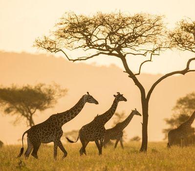 Covid-19 FAQ's East Africa Travel